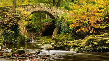A fantastical forest park thumbnail